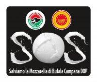 Salviamo la Mozzarella di Bufala Campana Dop. Al via la mobilitazione  Il Consorzio di Tutela